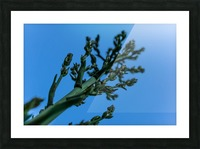 Yucca Skies Picture Frame print