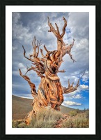Great Witness of Time Picture Frame print