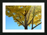 Yellow Fall Foliage Photograph Picture Frame print