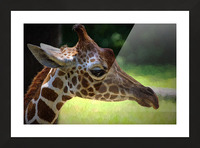 Giraffe  Picture Frame print
