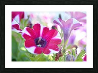 Floral Photography  Picture Frame print
