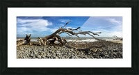 Driftwood Beach Panorama 101 Picture Frame print