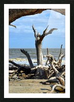 Driftwood Beach Uplifting Picture Frame print