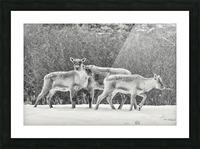 The Trio Picture Frame print