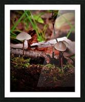 Cueillette sauvage Impression et Cadre photo