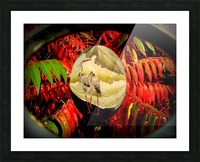 Cranes and red leaves Picture Frame print