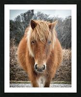 Assateague Horse Miekes NoeLani Picture Frame print