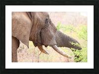 Elefant 6770 Picture Frame print
