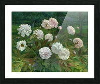 Peonies Picture Frame print