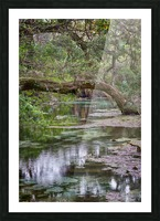Stream  Picture Frame print