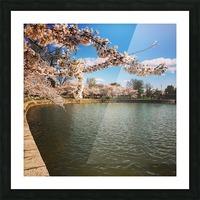 Cherry Blossom Branch Picture Frame print
