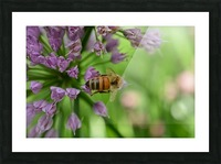 Bees & Flowers Photography Picture Frame print