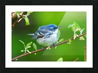 Birds Picture Frame print