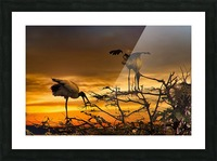Wood Storks at Sunset Picture Frame print