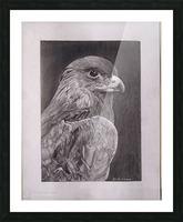 Falcon_DKS Picture Frame print