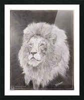 Lion_DKS Picture Frame print