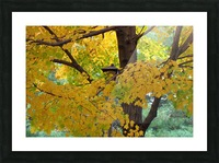 Fall Foliage Photograph Picture Frame print