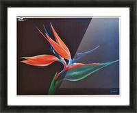 Bird of Paradise 2 Picture Frame print