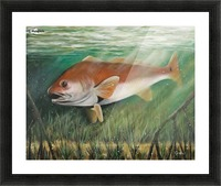 redfish Picture Frame print