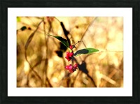 Fall Berries Picture Frame print