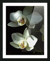 Orchids Picture Frame print