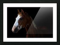 Studio Horses Picture Frame print