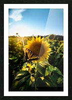 Sunflower Love Picture Frame print