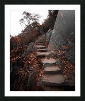 Autumn Path Picture Frame print