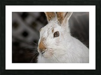 Mr Rabbit Picture Frame print