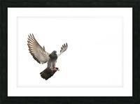 Take Flight Picture Frame print