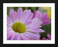 Floral Photograph  Picture Frame print