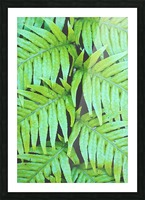 Fern Leaves Picture Frame print