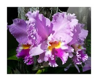 Frilly Orchid Picture Frame print