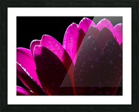 In The Light Picture Frame print
