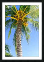 Palm Tree and Coconuts Picture Frame print