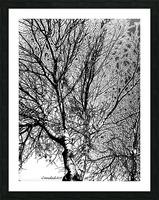 Afridaizy Black & White Trees Threshold029 Picture Frame print