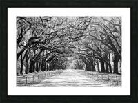 Wormsloe Plantation   Savannah 04420 Picture Frame print