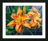 Day Lilies Picture Frame print