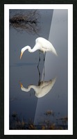 Who Are You White Egret Picture Frame print
