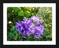 Violet flowers Picture Frame print