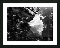 Blooming flower in black and white Picture Frame print