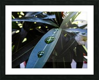 Raindrop on a green leaf Picture Frame print