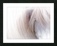 Icelandic Horse Picture Frame print