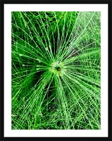 BOTANICA Picture Frame print