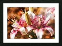 Stargazer Lily Picture Frame print