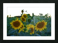 Sunflower Family Picture Frame print