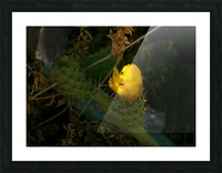 Cactus flower Picture Frame print