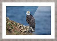 Perched and Proud Picture Frame print