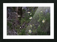 Forest flowers Picture Frame print