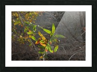 Autumn light Picture Frame print